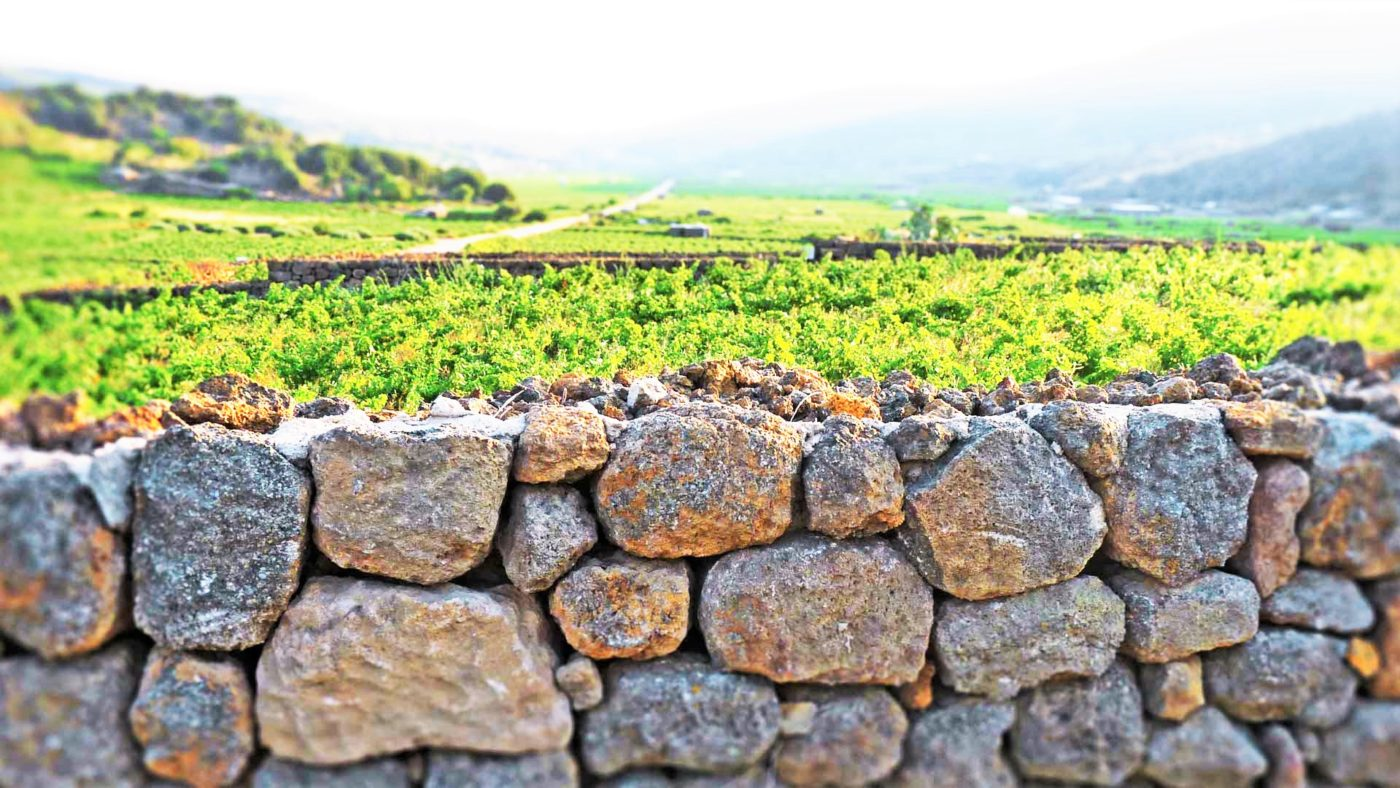 Wine Lovers Tour – Pantelleria & Marsala