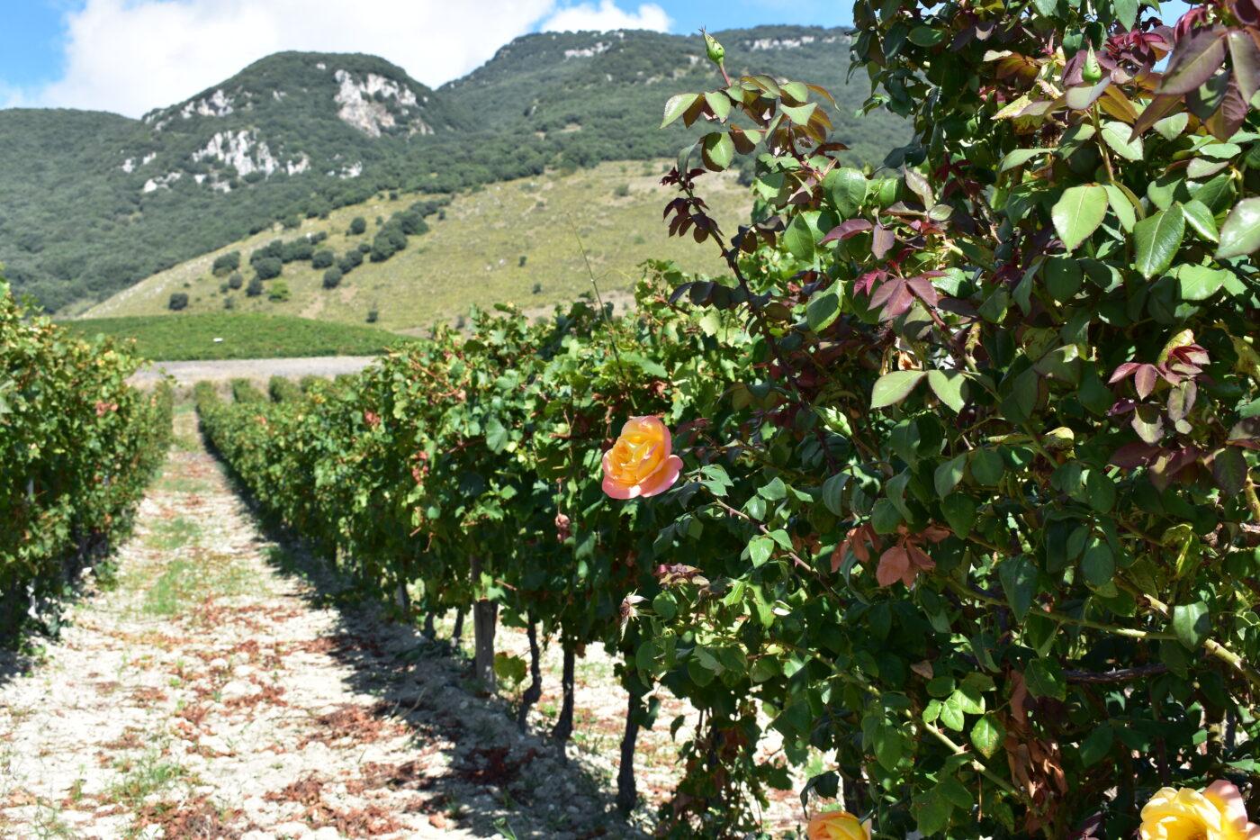 Degustazioni, fascino e territorio – Camporeale e Sambuca di Sicilia