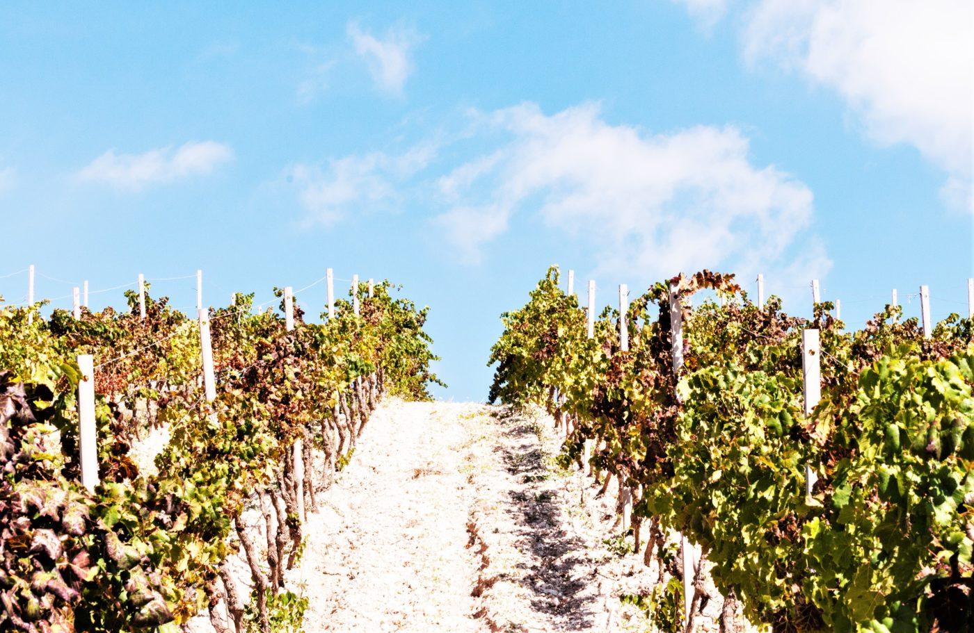 Wine Lovers Tour – Terre Sicane & Sicilia Centrale